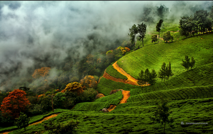 Cochin- Athirapally- Munnar Tour Package